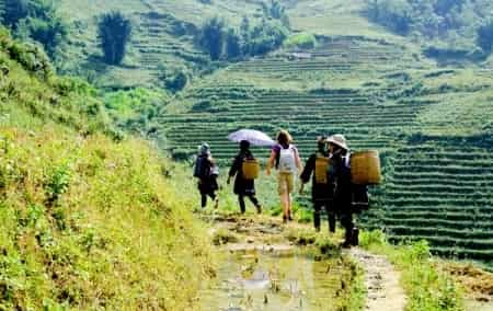 Sapa Medium Trek - Homestay